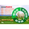 羊吃什么生长速度快养殖户给羊吃什么好