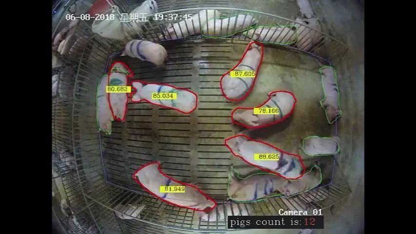 网易、京东、阿里...... AI养猪哪家强?