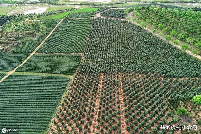 农村种粮食、蔬菜不赚钱怎么办?或许你应该种些苗木了
