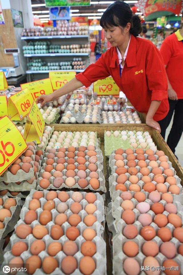 2019.08.17,全国主要农贸市场鸡蛋价格行情,长治、青岛、成都等