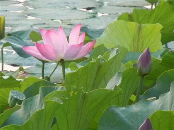 吃在保山秀色,可餐!野鸭湖畔吃花赏花,今天也是精致的猪猪!