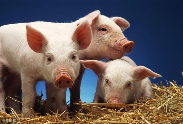 猪价怎么就越调控越涨的快?政策是在刺激消费者购买进口猪肉吗?