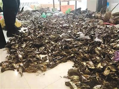 哈尔滨一特产店现7000余只野生动物 嫌疑人已被控制