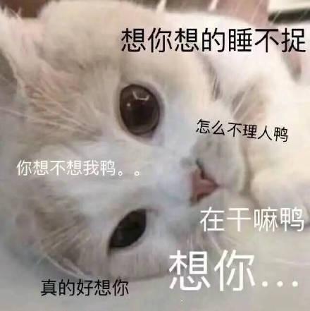 表情猫咪:想你,脑子里全是你方言包河南表情经典图片