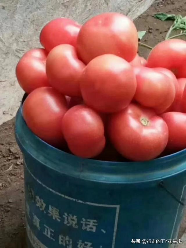 山西长治紫坊农产品批发市场6月22号果蔬批发价格(采购关注)