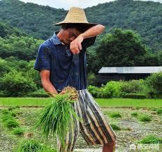 农村人搞种植,为什么赚不到大钱?农民都遇到了哪些误区?