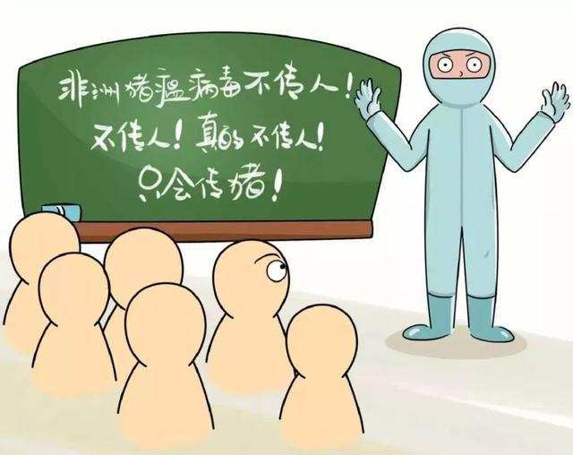 非洲猪瘟防治知识科普!只在猪之间传播,不感染人