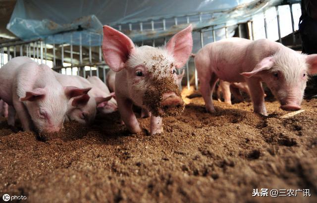 有人问:现在补贴力度大,搞养猪怎么样?附:9月11日生猪价格