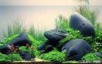 大家熟悉的鹅卵石,在鱼缸造景方面还有不可替代性图片