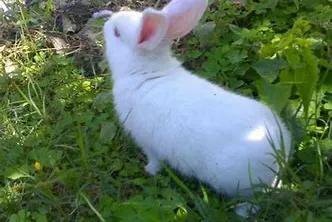 养殖兔子的注意事项你都知道吗?