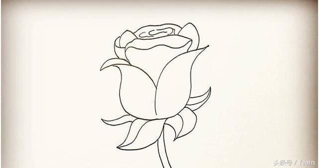 简单的玫瑰花简笔画