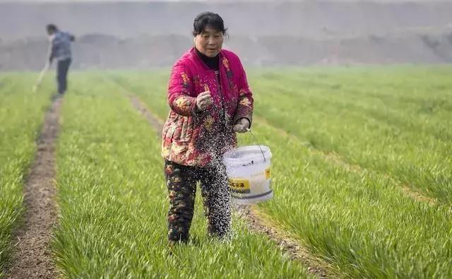 朝阳生物:都说有机肥比化肥好,那么不用化肥只用有机肥行不行?