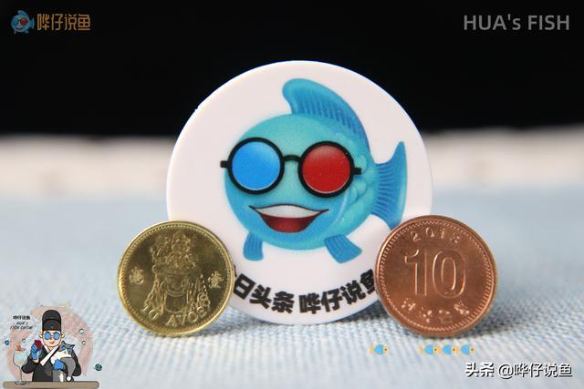 辟谣!鱼缸爆发蛋白虫,用铜币就能摆平?别那观赏鱼的命开玩笑