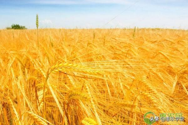 2019年11月份小麦价格行情预测及分析