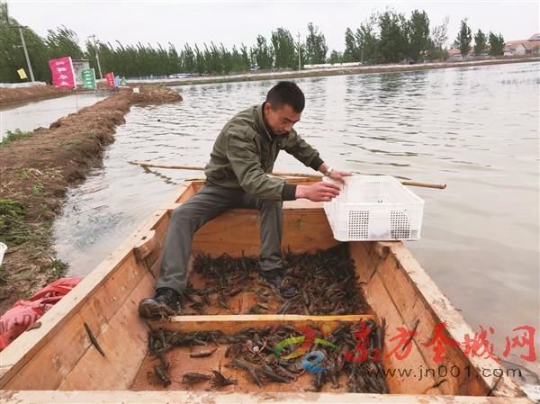 """稻虾共作商机大 山东济宁鱼台县养殖的小龙虾住进生态""""小区"""""""