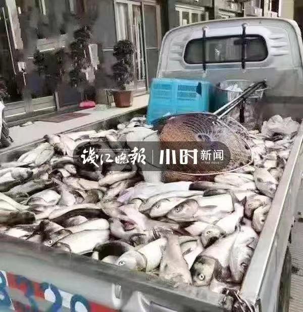"""奇观!温州网红村突然出现""""漫天飞鱼"""",站着就有鱼直接跳到手心"""