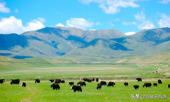海拔4000+米的美味!原生态高原牦牛~就在成都康巴拉牦牛主题火锅