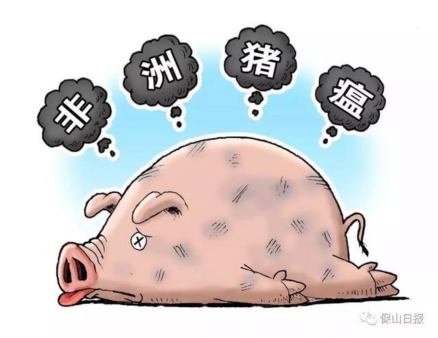 「今日关注」保山未发现非洲猪瘟疫情