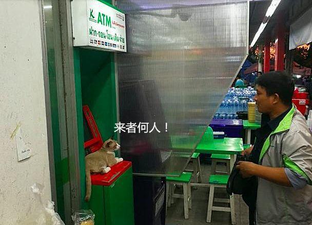 男子去取钱芦荟,取款机被一只v男子猫霸占,掏出晒后如何用银行胶修复图片