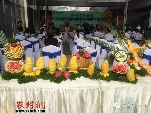 广西特产行销全国 2016年百色芒果推介会在西安举行