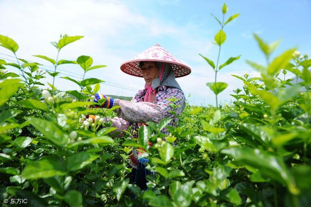 农业转型很关键:这条农村产业路线被称为朝阳产业!大家觉得如何