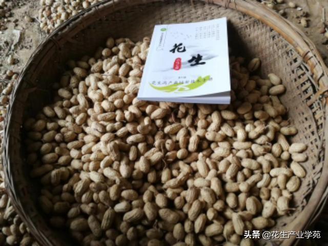 5月2山东莱芜、长清、岱岳、新泰、滕州、单县、曹县花生收购价格