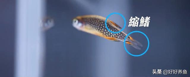 得了鱼病不知怎么办?养鱼高手教你破解鱼缸十大杀手,马上收藏