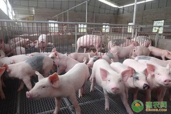 2019农村养殖项目补贴政策,如何才能申请到政府扶持项目?