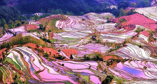 用朝阳产业推动农村发展,让每一个农民都过上好日子!