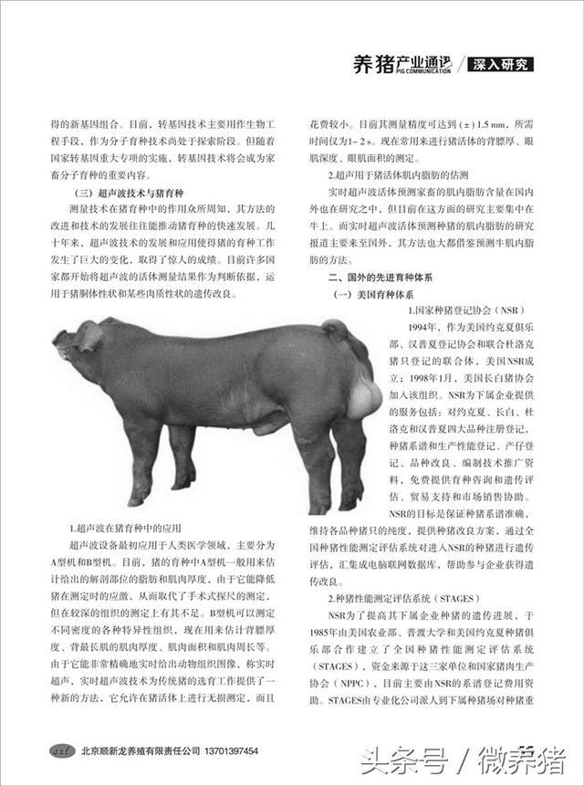 微养猪(融媒体)《中部养猪》66期在线阅读