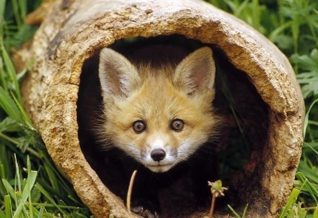 结果狐狸渡劫,滚滚天雷都劈不死,千年被人活生萤视频动态大图片