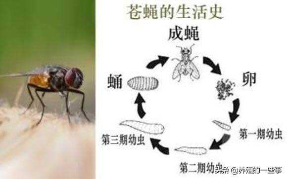 就用这3招,彻底消灭猪场的蚊蝇,不妨先试试