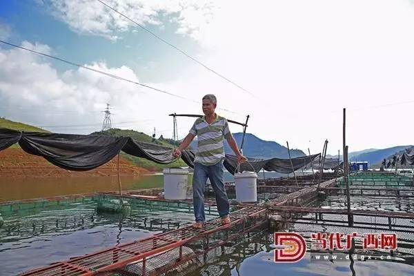 初识百色六丰村 网箱养殖使民富