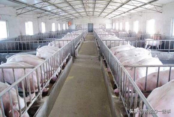 养猪补贴哪么多,为什么你一分没拿到,农户:都补贴给大猪场了