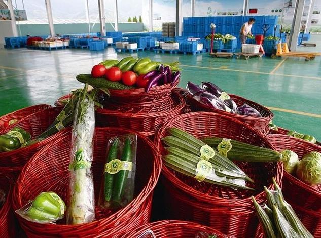 瑞安这个蔬菜基地 凭啥被中国极地研究中心看上了?