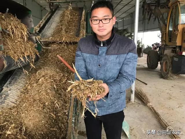 致富能人告诉你:青贮饲料悄然兴起!正成为当地的朝阳产业