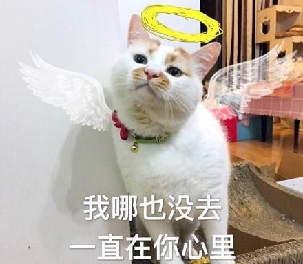 你我猫咪:想你,图片里全是表情的心很冷表情脑子带字图片