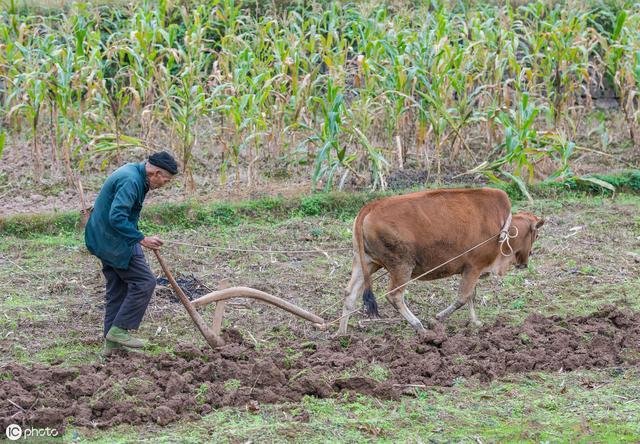 农人说农事,时间一晃秋收已近尾声,你家油菜小麦都播种完了吗