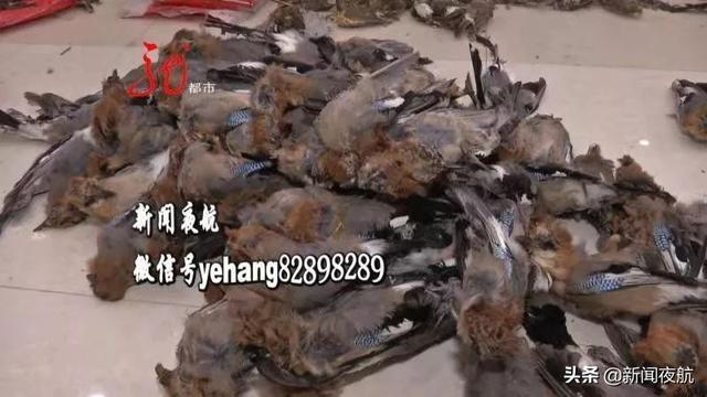 七千多只野生鸟遭毒手!巴彦这家特产店违法出售野生鸟类!执法人员清点三个多小时,场面触目惊心