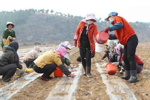 朝阳:佛爷洞村栽植大蒜带动村民致富
