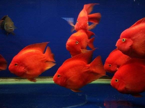 给观赏鱼换水,可以直接使用热水器的水吗?