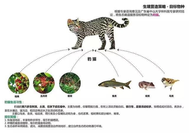 就是这么有爱!深圳要为豹猫猪獾建座桥,上面全是树