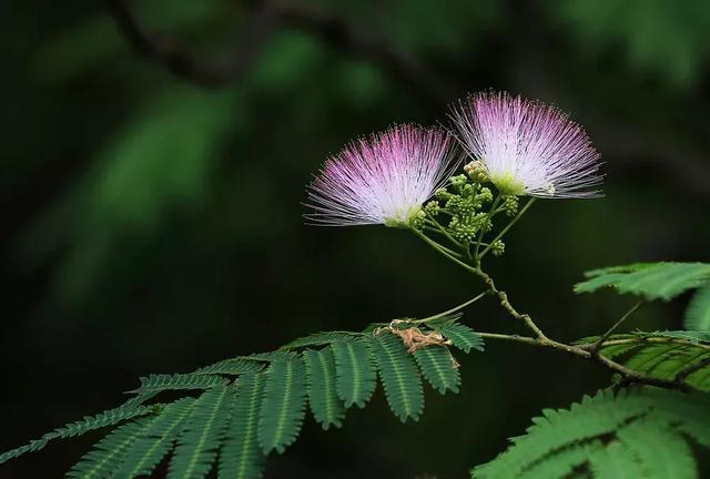 """一花一世界,一叶一菩提,带你走入诗词中的""""花花""""世界!"""