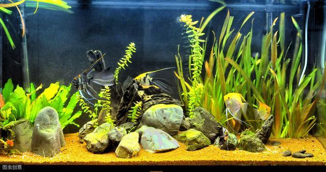 原来宠物热带鱼有这么多种类,眼睛都看花了