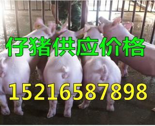 最近猪仔价格行情分析仔猪价格走向