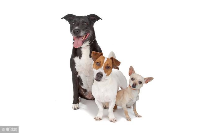 宠物养护知识:你不知道的狗狗生活习性,食粪也是一种习性