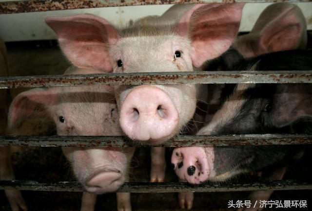济宁 环保政策的加码是对养殖行业发展的变革