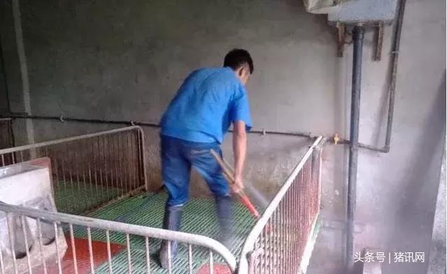 这样清洗栏舍!猪住着安全