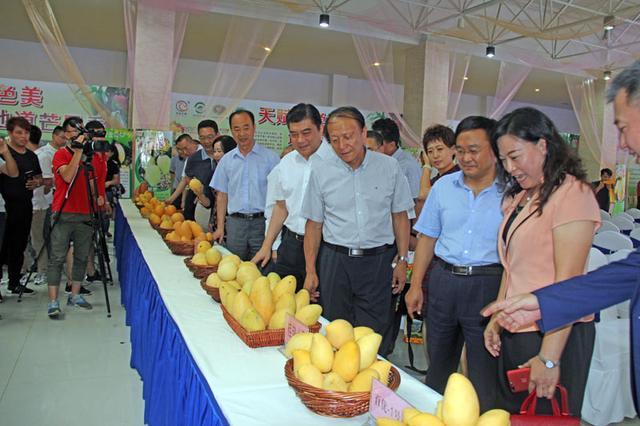 广西特产行销全国,百色芒果在内蒙古呼和浩特获赞