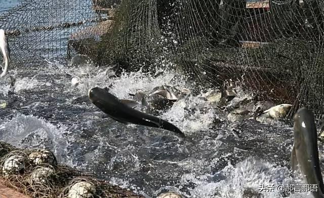 温州老板挖个鱼塘让用户免费钓鱼如何从亏损100万 到 盈利500万的